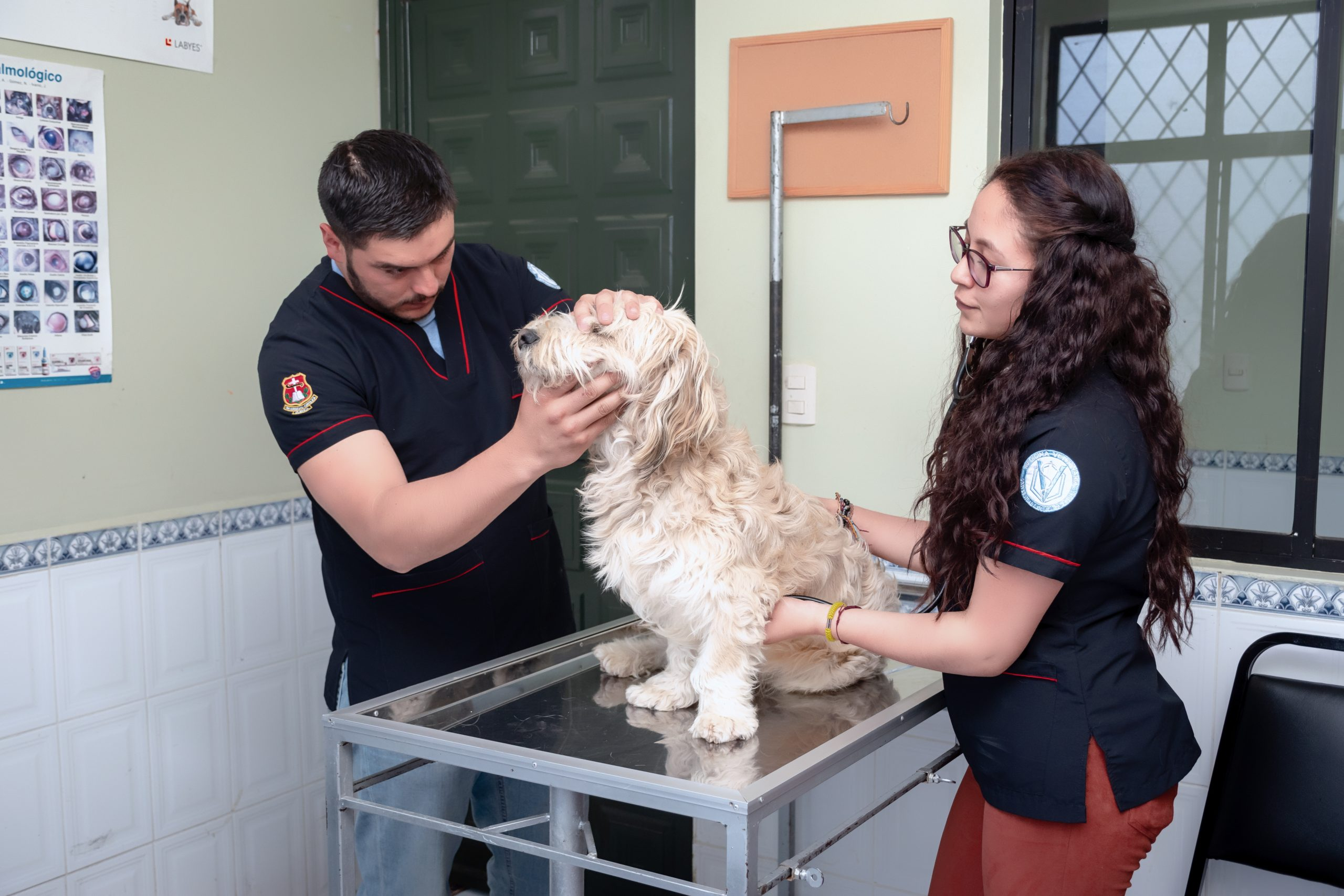 analisis_canino