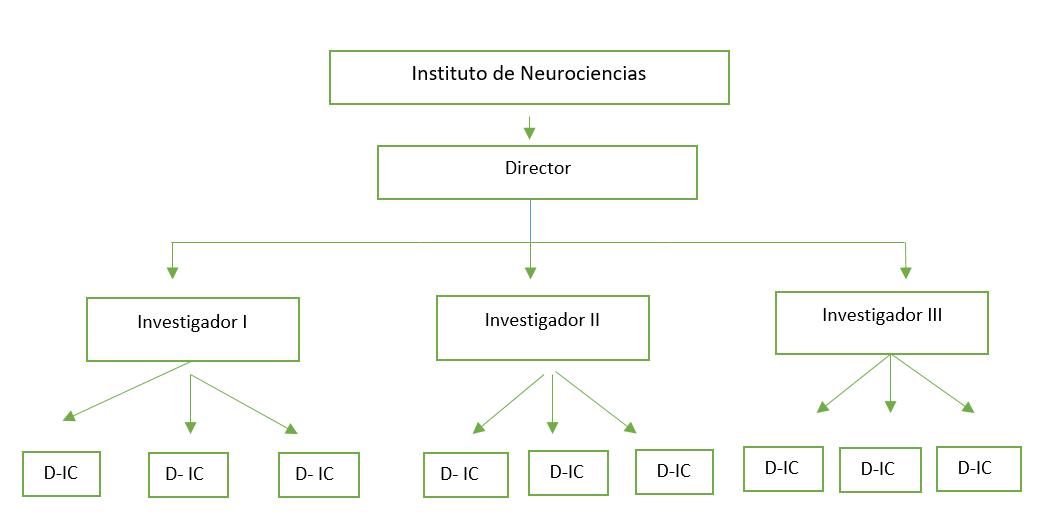 estrutura de neurociencia